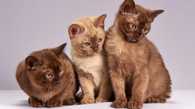 3びきの猫