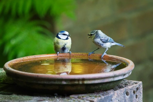 会話する鳥
