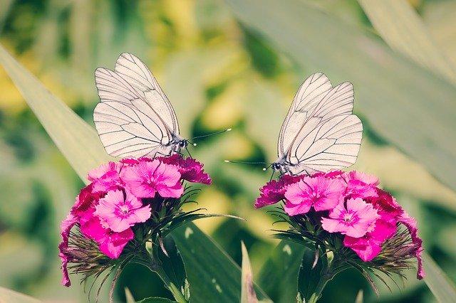 2つの花と蝶